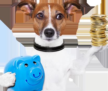 dog-with-money